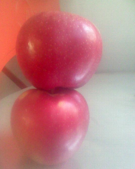 蒲城苹果代办
