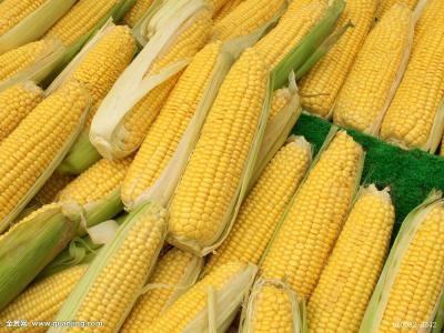 蒲城甜玉米