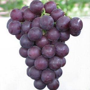蒲城巨峰葡萄
